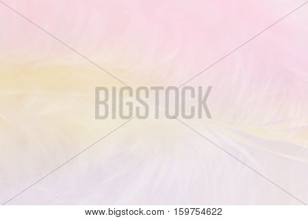 Background of close up image of pastel pink, yellow and blue feathers