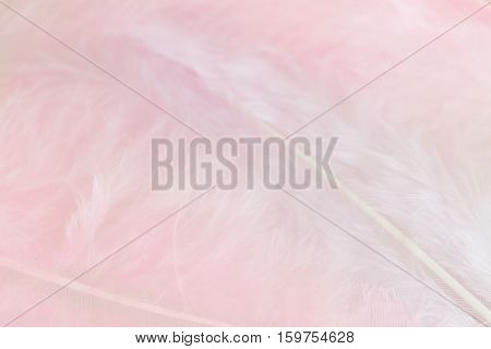 Background of close up image of pastel pink feathers