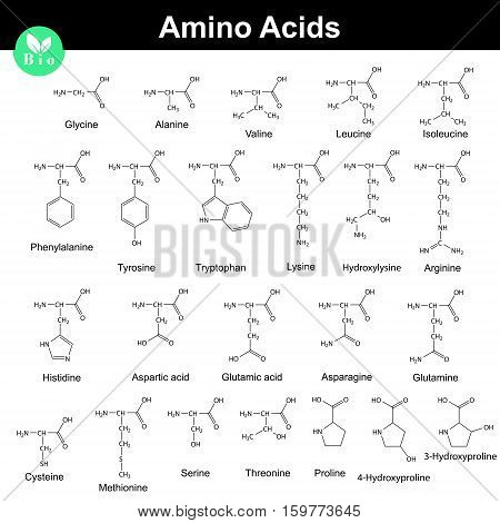 Biogenic amino acids molecular structures 2d chemical vector illustration isolated on white background eps 8