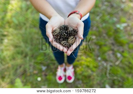Top view on woman's hands full of pine cones.