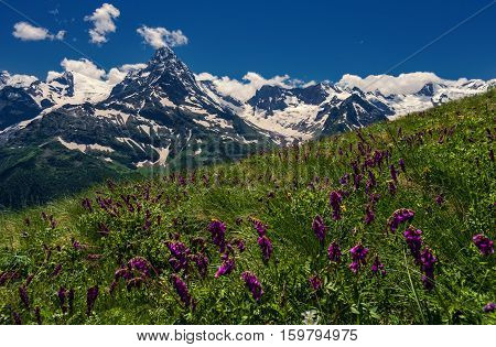 Mountains and flowers Caucasus.Photographed in the Caucasus Mountains, Dombai