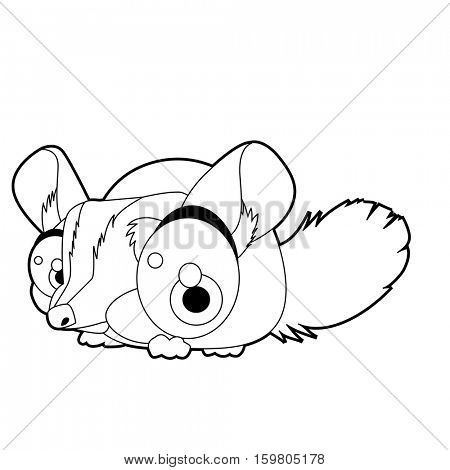 Chinchilla Images Illustrations Vectors Chinchilla Stock