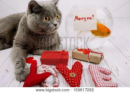 Word Love Made Of Red Cloth Letters Lies Before Grey British Shorthair Cat And Aquarium With Card 'm