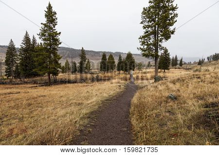 This hiking trail leads to Wraith Falls in Yellowstone National Park USA.