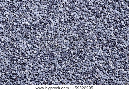 Blue poppy seeds from above. Oilseed from opium poppy, Paper somniferum, with tiny kidney-shaped seeds, less than a millimeter in length. Macro food photo of dried whole fruits.