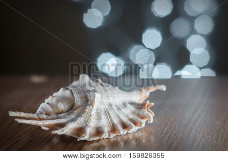 A seashell lies on a wooden table on a background of bokeh lights