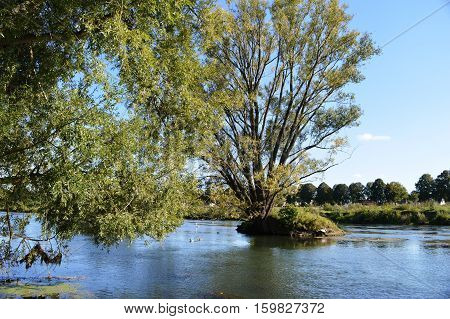 Baum in der Lippe in der Nähe von Lippstadt