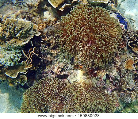 Anemone Fish And Soft Coral