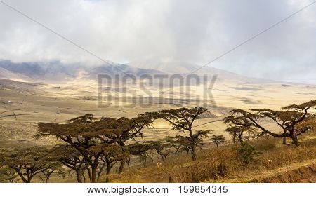 Beautiful landscape an early morning in the Ngorongoro crater in Tanzania, Africa.