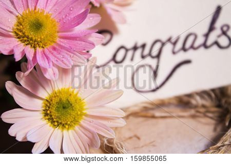 Two beautiful delicate flower with dew drops on blurred background inscription congrats