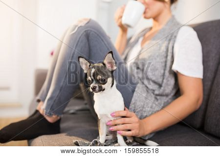 Chilling Out With Dog