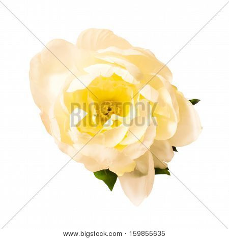White peony isolated on white background. Artificial flower.