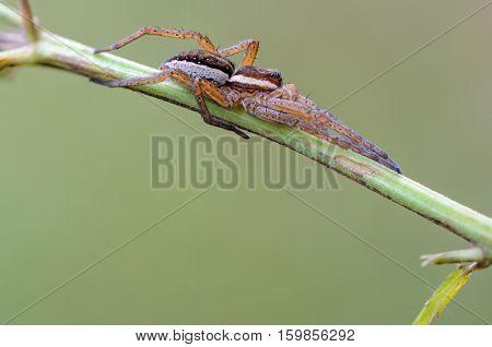 Portrait Of Spider-hunter