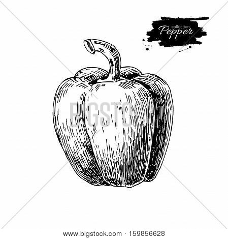 Pepper hand drawn vector illustration. Vegetable engraved style object. Isolated bell pepper. Detailed vegetarian food drawing. Farm market product. Paprika icon