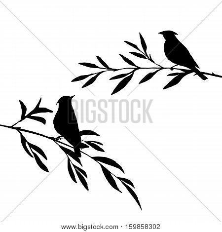 vector silhouettes of birds at tree, hand drawn songbirds at branches, Valentine symbol, a pair of lovers, isolated vector element