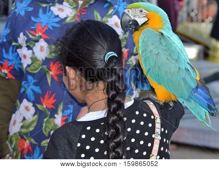 parrot shoulder colorful bird girl braid hair Hawaiian shirt