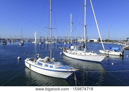 Several Sailboats tied and moored in a San Diego Marina