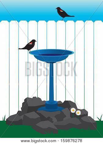 Two blackbirds enjoying a back yard bird bath