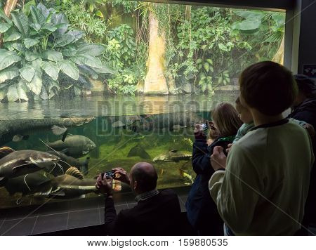 Kids In Aquarium Admire The Fishes
