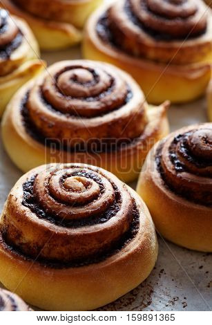 Cinnamon rolls buns with spices and cocoa filling. Sweet Homemade christmas baking. Close-up. Kanelbulle - swedish pastry dessert.