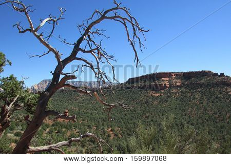 Landscape of the red rock formations in Sedona, Arizona.