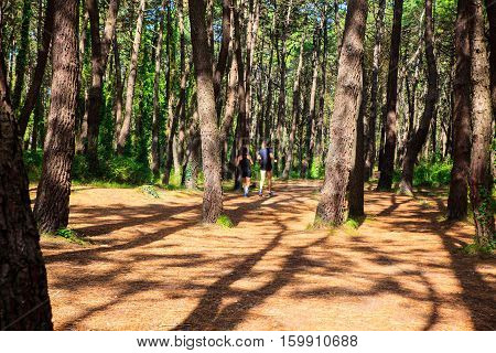 LIENCRES DUNES SPAIN - AUGUST 21: A couple jogging in a path between the trees on August 21 2016
