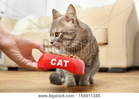 Woman hand feeding cat at home