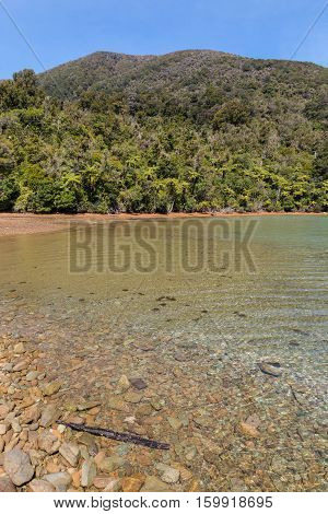 coastline with rainforest in Marlborough Sounds, South Island, New Zealand
