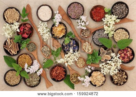 Fresh and dried herbs and flowers used in natural herbal remedies.