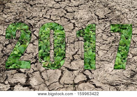 Happy New Year 2017 In Dry Soil And Plant Theme