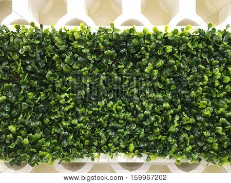 The walls are decorated with strips of artificial green grass.