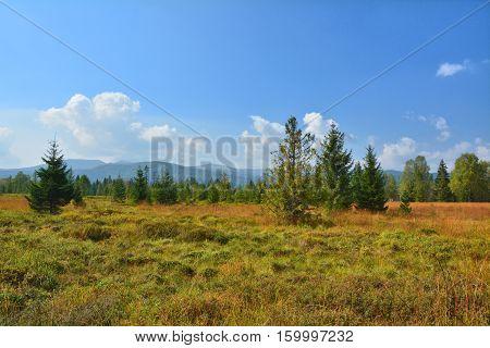 Peat bog landscape in Poland National Park Bieszczady