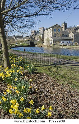 canal side daffodils