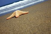 Starfish stranded on a sunny beach with wave poster