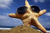 Starfish on a sunny beach with sunglasses poster
