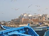 Sea gull over the harbour and the city rampart with a blue boat on the foreground - Essaouira - Morocco. poster