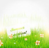 Summer grass banner with flowers, ladybird, drops and sun shine. eps 10. poster