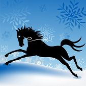 winter freedom horse poster