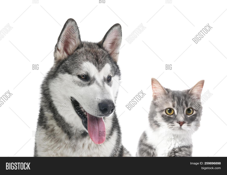Portrait Cute Cat Dog Image Photo Free Trial Bigstock