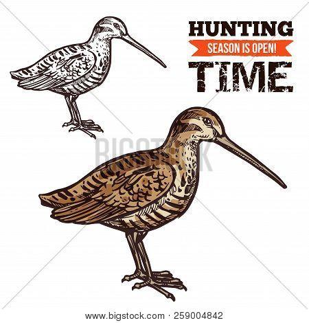 Vector Isolated Wild Forest Eurasian Woodcock Bird, Hunt Adventure. Hunting Open Season, Hunter Soci