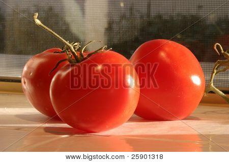 Fresh picked vine ripe red tomatoes