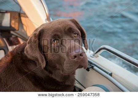 Boating. Brown Labrador Looking At The Scenic Autumn Beauty From White Boat