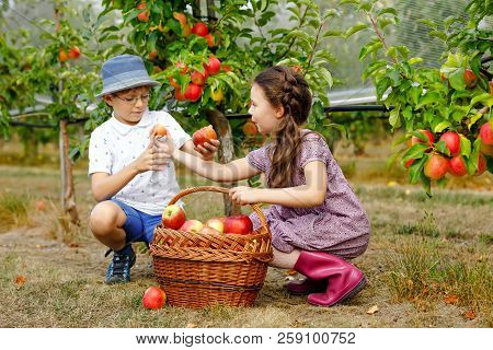 Portrait Of Little Girl And Kid Boy With Red Apples In Organic Orchard. Happy Siblings, Children, Br