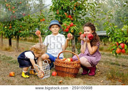 Portrait Of Two Little Girls And Kid Boy With Red Apples In Organic Orchard. Happy Siblings, Childre