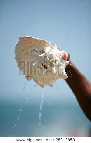 a person picks up a Conch shell out of the ocean as water drains out with a blue sky and green ocean background