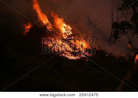 11-15-2008 Brea California Wild Fire Series. Various images from Southern California Wild Fires poster