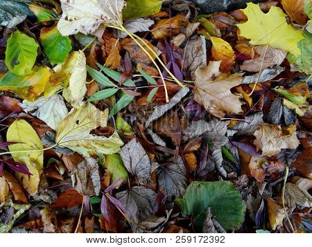 Autumn Leaves On The Ground Background - Top View