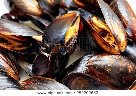 Frozen Mussel In The Shell. Freshly-frozen Mussels In Shells Close-up. The Mussel In The Sink Is Rea