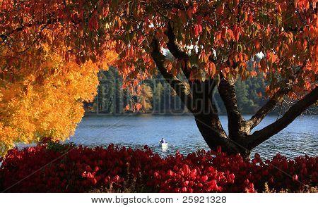Autumn,Seattle's Lake Washington Blvd. #4