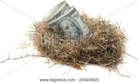 Financial Nest Egg concept $100.00 (one hundred dollar bills)    inside a bird nest